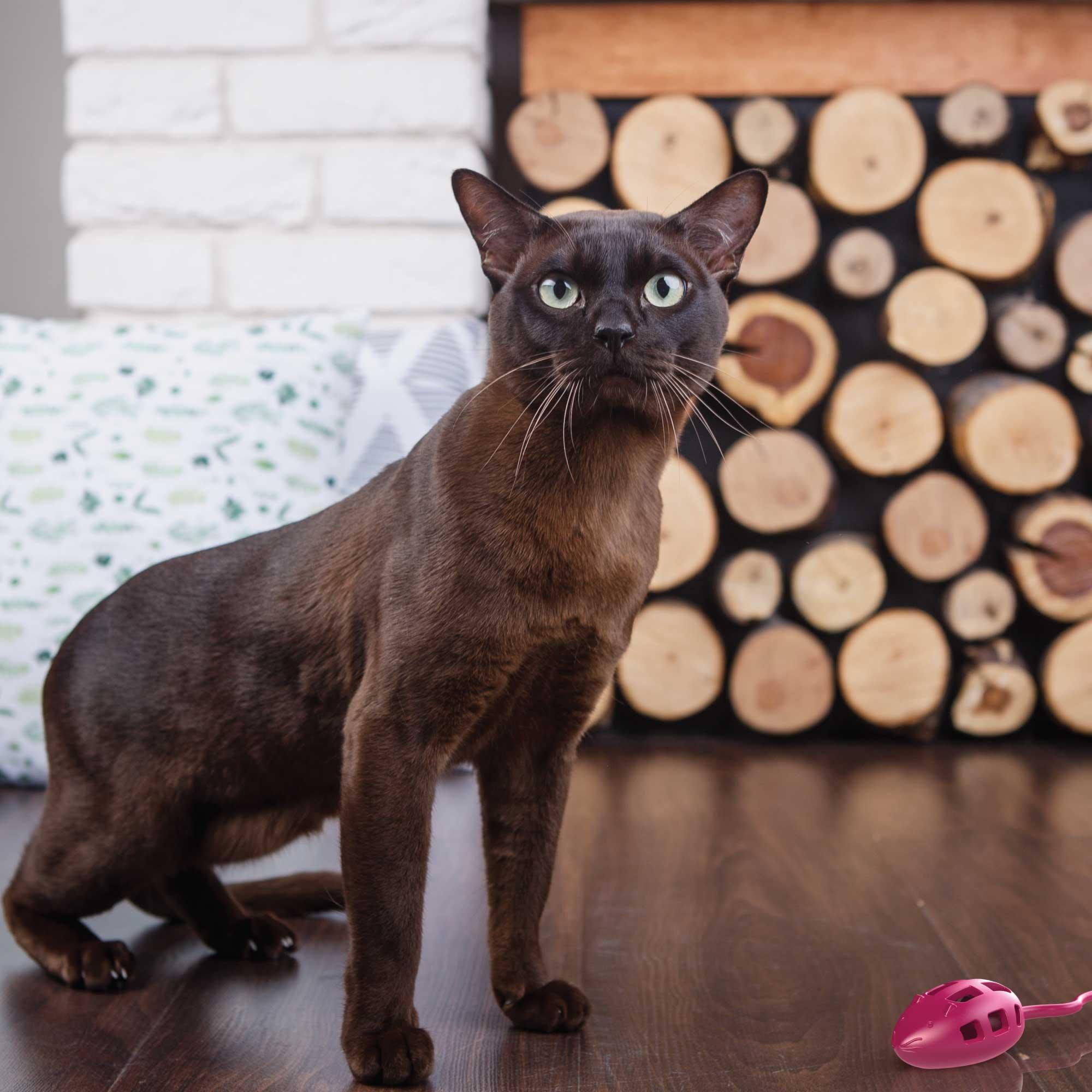 Aikiou Thin Cat Interactive Puzzle Slow Feeder The Best